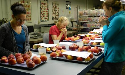 Apples to Apples: Creating new cider apple cultivars to confront a changing climate