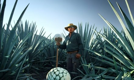 Make It Right: Patrón Spirits International's sustainability efforts are helping to improve Mexico's environment.