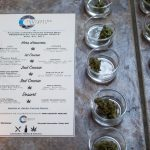 Going Green: Legalized marijuana brings challenges and opportunities to the alcohol beverage industry.