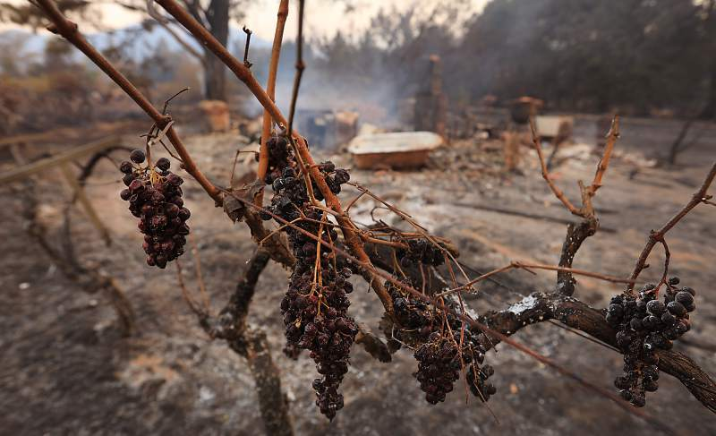 Rising from the Ashes: Northern California Wine Country looks to the future in the wake of devastating wildfires.
