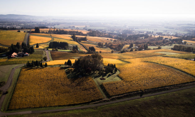 THE FAMILY COPPOLA ACQUIRES VISTA HILLS VINEYARDS WILLAMETTE VALLEY
