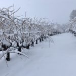 El Dorado Wine Region Keen on Winter of 2019