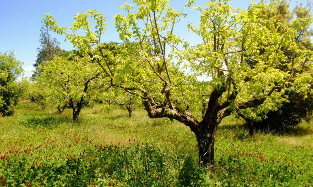 Inside Cider: Consider Carbon Farming
