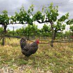Inside Wine: Return to Natural