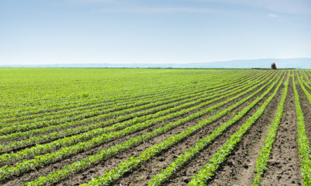 Rethinking Agriculture: Indigo Ag Disrupts the Industry