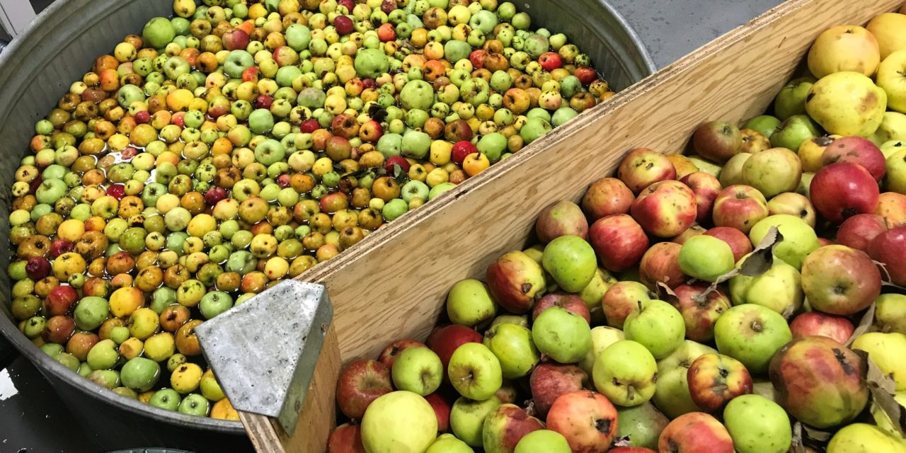 Portland Cider Co. invites neighbors to turn backyard apples and fruits into a community cider to feed the hungry