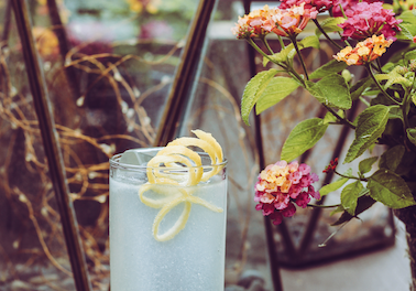 Cocktails & Conservation: The Monarch Cocktail Bar Supports Butterfly Conservation with Craft Cocktail