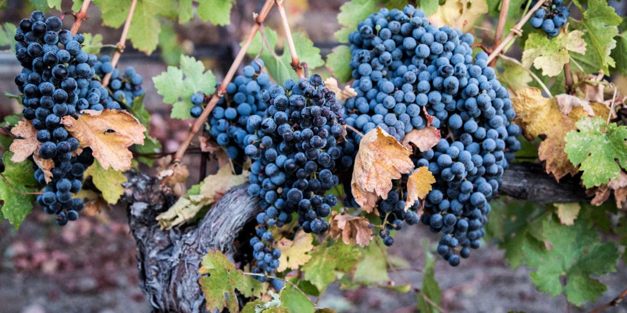 Inside Wine: Cabernet Franc Deserves More Respect