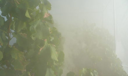 Smoke Screen: As wine regions globally are impacted by wildfires and lingering smoke, scientists and industry labs are looking for ways to lessen the impact on grapes and finished wine.