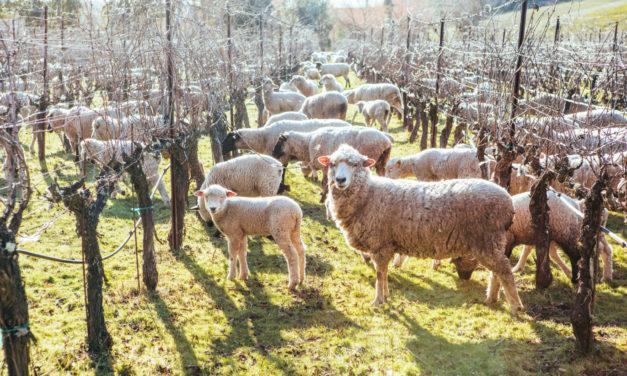 Cline: A Family and Farm Affair