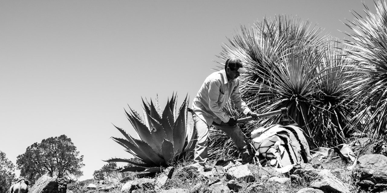 A Beginner's Guide to Mezcal: Toast the Spirit of Community and Savor Every Moment by the Sip with Pure-Distilled IZO Agave Spirits