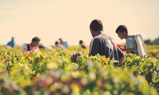PARTICIPATE IN THE BORDEAUX HARVEST WITH THE BORDEAUX WINE SCHOOL