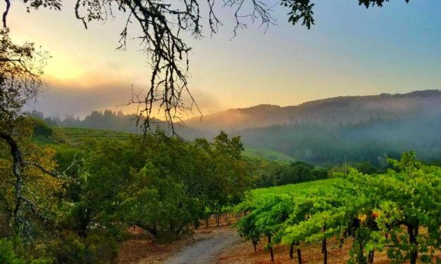 Inside Wine: A Vexing Vintage