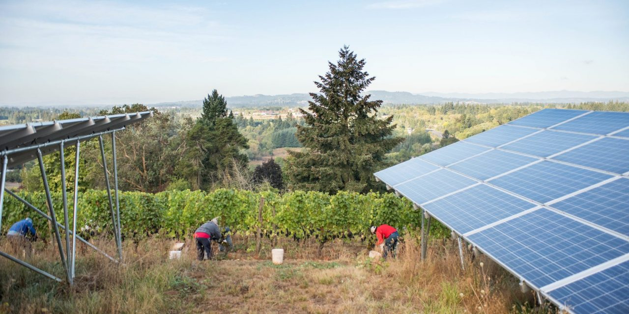 Off the Grid: Alternative energy systems give small producers a unique story to tell