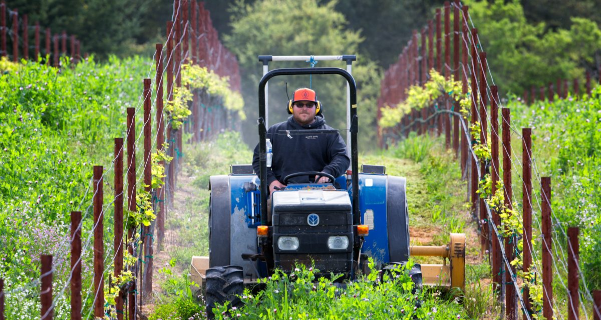 Inside Wine: Putting the Machines to Work