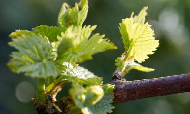 Inside Wine: Respect Your Vines, Respect Each Other