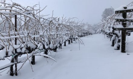 El Dorado Wine Region Keen on Winter of 2019