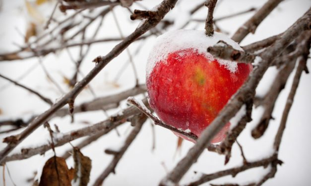 Inside Cider: The Intricacy of Ice Cider