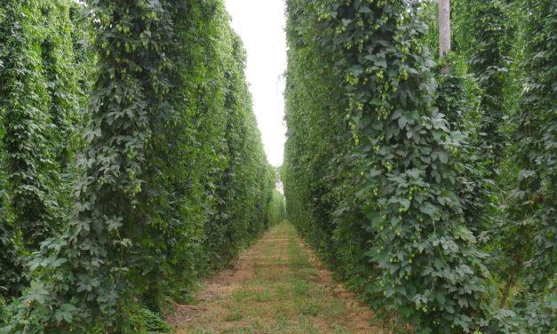 The Good Earth: Can terroir translate beyond wine?