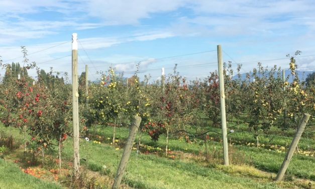 Inside Cider: Crunching the Numbers