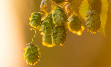 Inside Climate: Brewing in a Warming World (Guest Column)