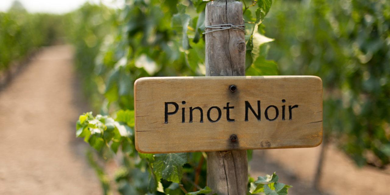 August 18: Pinot Noir Day