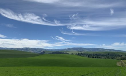Echolands Winery Announces Acquisition of Mill Creek in Walla Walla AVA, a 340-Acre Vineyard Site at the Foothills of the Blue Mountains