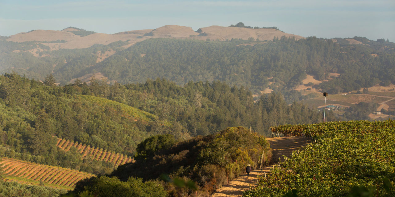 2020 CDFA Specialty Crop Block Awarded to Winegrowers of Dry Creek Valley for Multi-Market Zinfandel Campaign