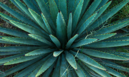 Oct. 21: National Mezcal Day