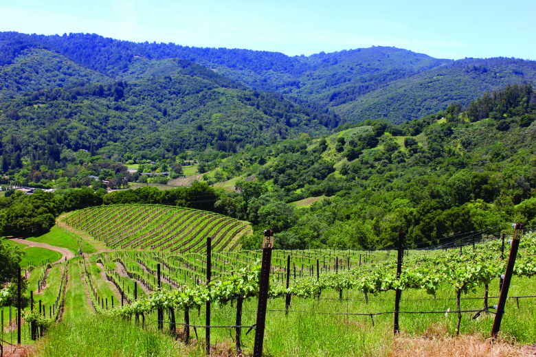 Bates Ranch: A Vineyard with Horsepower and History